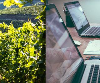 Le Système de Management Environnemental des Vins de Bordeaux
